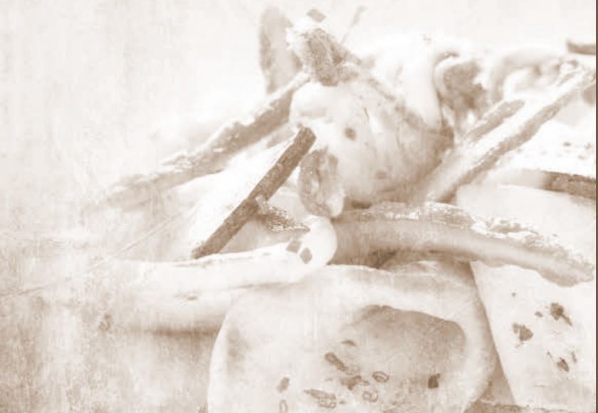 sepia tinted cuttlefish